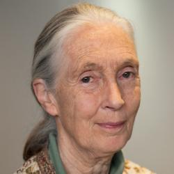 primatologist Jane Goodall coming to the VUB